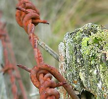Barbed Wire & Moss by AUSSKY