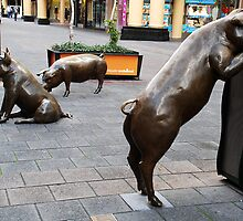 Rundle Mall Pigs by Kelly Turnbull