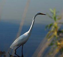 Egretta 5 by artsphotoshop