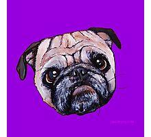 Butch the Pug - Purple Photographic Print