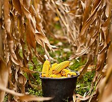 Bucket full of corn by naturalis