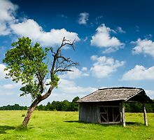 Wooden cabin and tree by naturalis