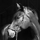 Exquisite Equine by Lolabud
