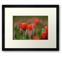 Dreamy tulips Framed Print