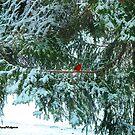 Red Bird by jpryce