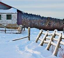 The Old Fence by Kathleen Daley