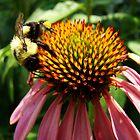 Pollen Hunter by LauraElizabeth