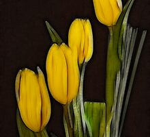 Yellow Tulips by Geoff Marshall