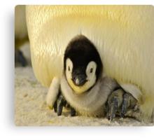 Cute Animals - Penguin Canvas Print