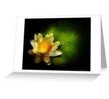 Nymphaea  Chromatella - Yellow Lilly Greeting Card