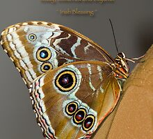 Butterfly on my Shoulder by Bonnie T.  Barry
