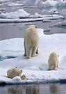 A Bear Behind!    by Steve Bulford