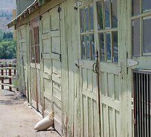 doors of lavender harvest building by Lenny La Rue, IPA