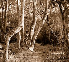Spotted Gum Path by Amy Evans