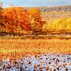 Autumn at Wildwood by Shelley Neff