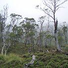misty bushland by gaylene