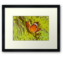 Anemonefish IV Framed Print