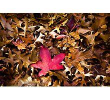 autumn red Photographic Print