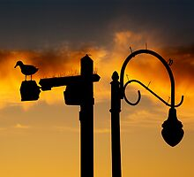Seagull with lamppost at sunset by Daniel Sorine