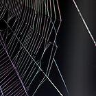 A Spider's Web by Tom Allen