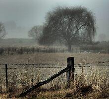 In the Fog by Raquel O'Neill
