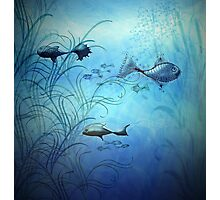 Fishy Fishes Photographic Print