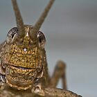 Grasshopper's face by AllshotsImaging