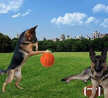 WATCH ME DRIBBLE >>GERMAN SHEPARDS HAVING FUN IN THE PARK by ✿✿ Bonita ✿✿ ђєℓℓσ