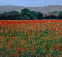 Fields of Red by Tainia Finlay