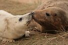 A Mothers Love by Paul Thompson Photography