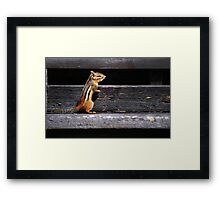 Tiny Visitor... Framed Print