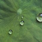 droplets 2 by Jarrod Hall