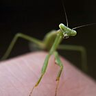 praying mantis by Jarrod Hall