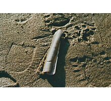 Razor Shell in Sand Photographic Print