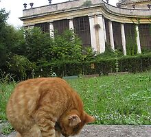 Yoga cat in Rome by Neety