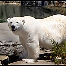 Artic Smile by Nikki Collier