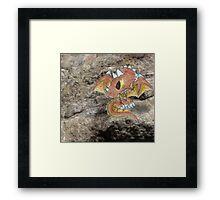 Tricera Dragon Hatchling on the Rocks Framed Print