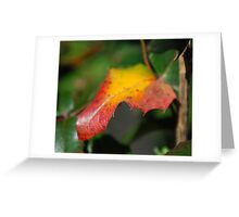 Colours... Greeting Card