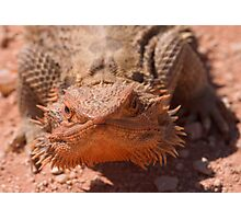 Central Bearded Dragon Photographic Print
