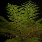 Fern in the Night by KazM