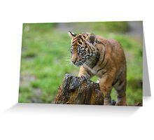 Sumatran Tiger Cub Playing Greeting Card