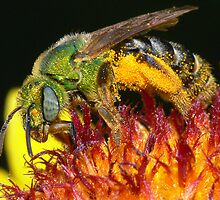 Pollen Party Pooper ! by robkal