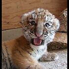 I'm a TIGER! Not a kitty!! by starbucksgirl26
