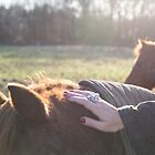 The horses in the winter light by Justine Gordon
