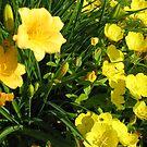 Yellow Flowers #2 by gypsykatz