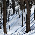 Snowy woods by Laurie Minor