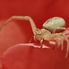 Crab Spider by BluAlien