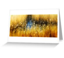 Reed Beds Southwold, Suffolk. Greeting Card