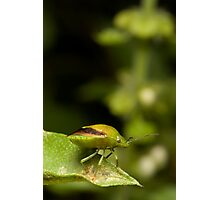 Green Bug Photographic Print