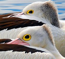 A Pair of Punk Pelicans....... by Gordon Pressley